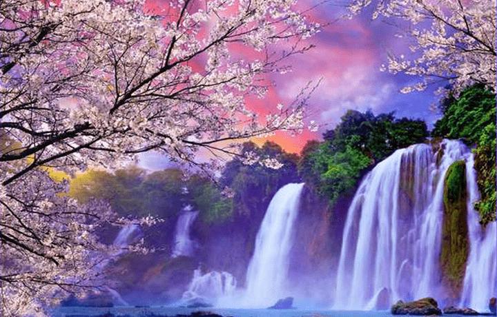 Пять Лепестков Цветка Сливы