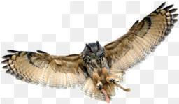 Afina-sova